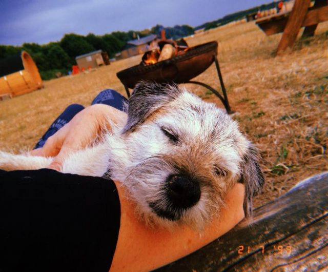 Dog-friendly Glamping Norfolk