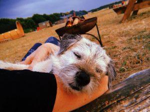 Glamping Pet Friendly Norfolk